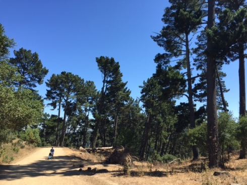 West Ridge trail, Redwood Regional Park, close to Skygate.